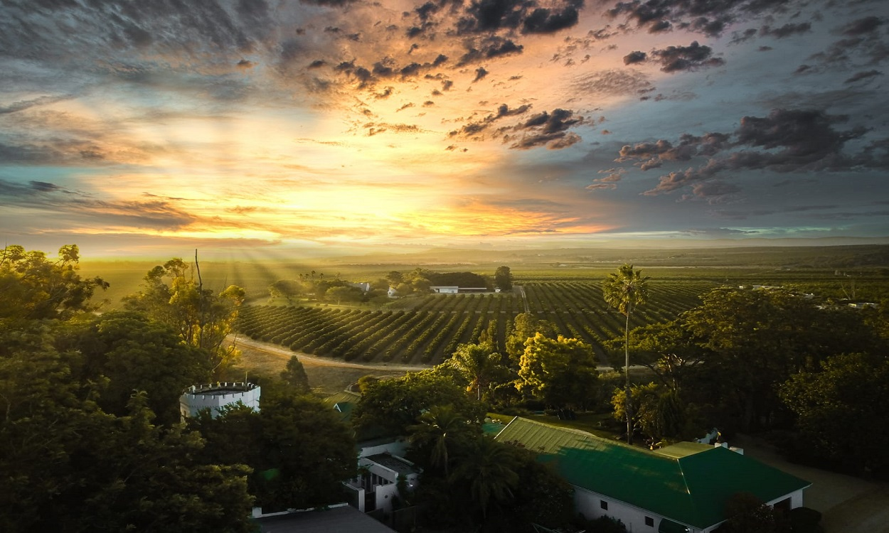 Aerial Sunset Picture of Avoca & Citrus Orchards