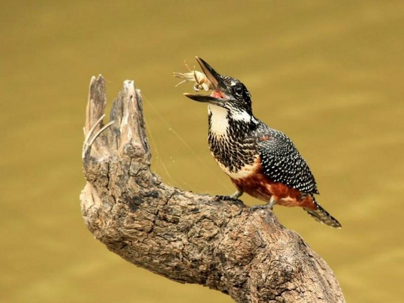 Amakhala Water Bird