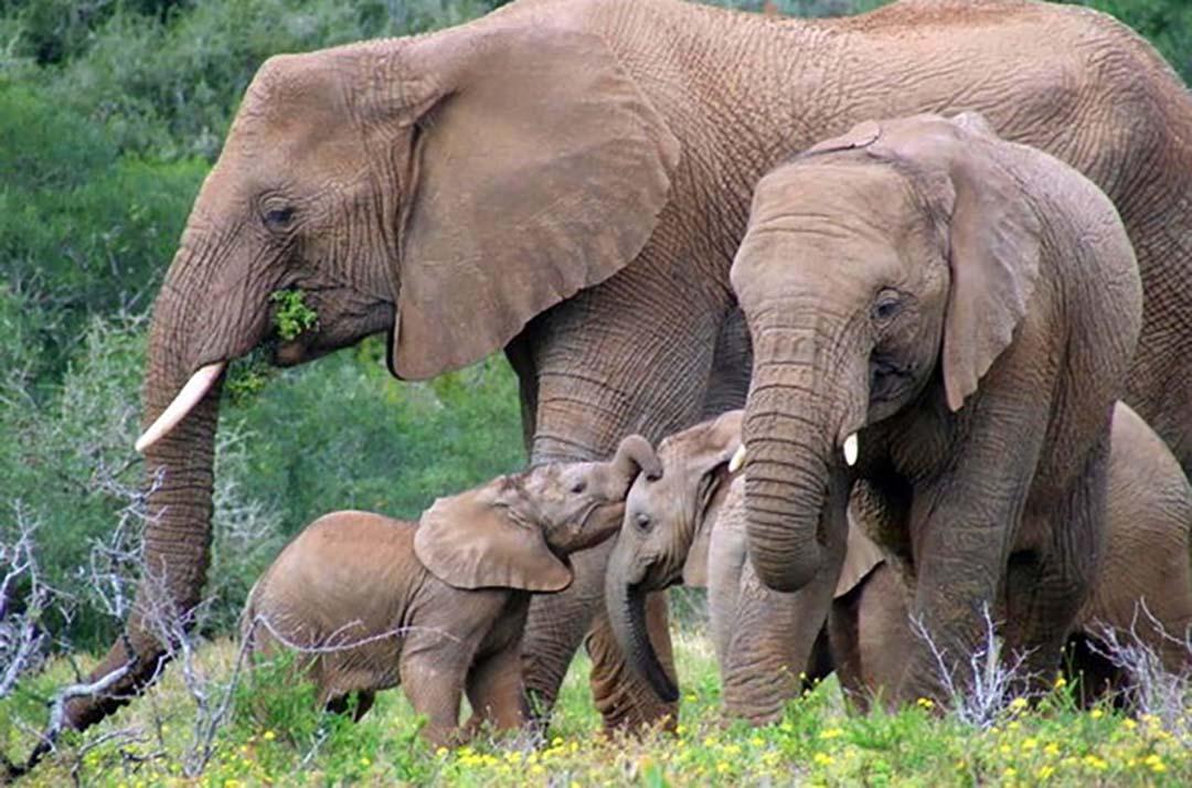 Ele Family_Day Safari Sighting