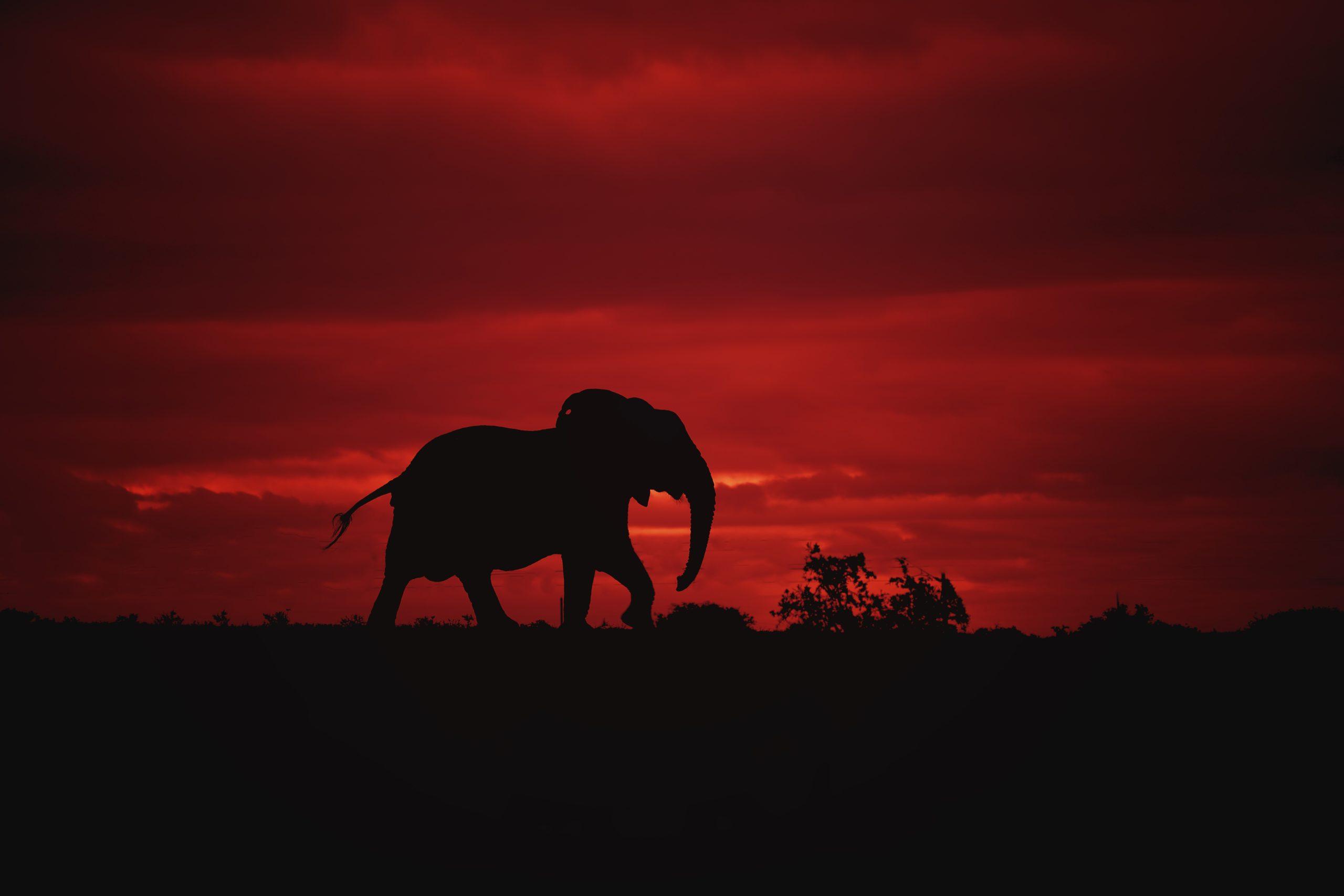 RB-Elephant-horizon-01